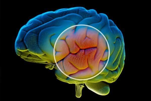 Parkinson – Aspekte zur Pathophysiologie und Therapie