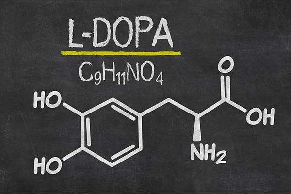 Parkinson und L-Dopa-Therapie:
